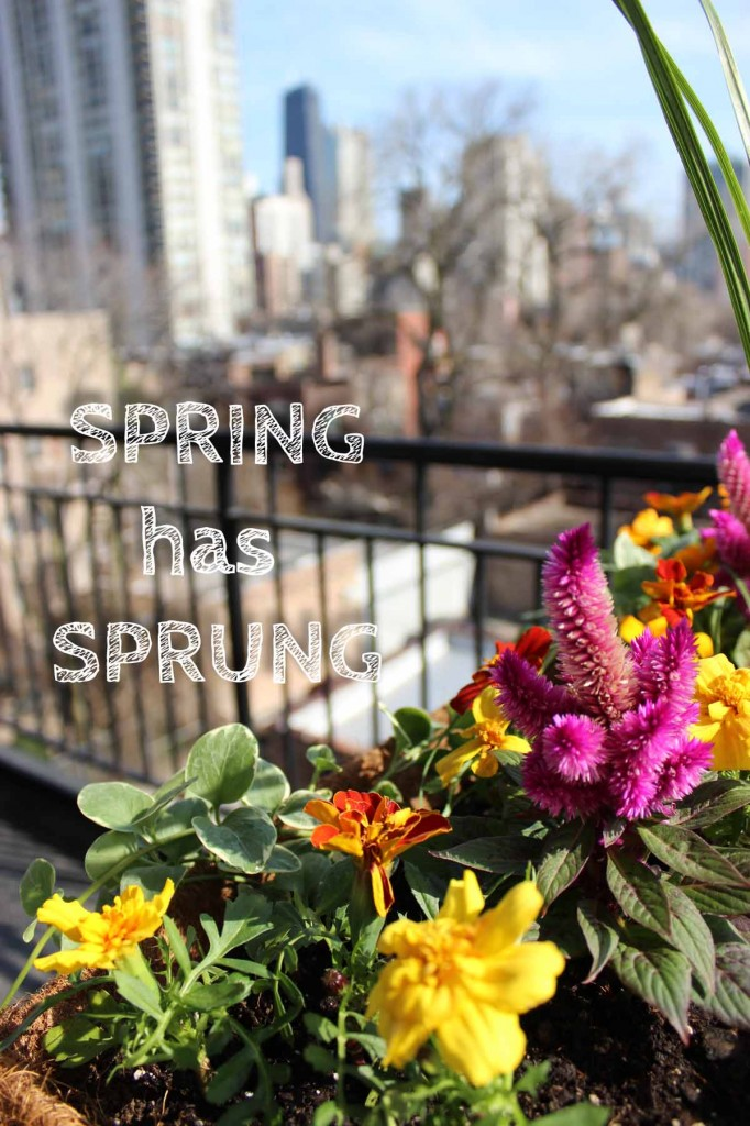 Spring has sprung in Chicago by Kate Frankenberg